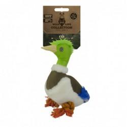 Wild Life Dog Duck
