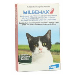 Ontworming kat