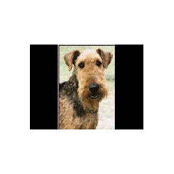 Airedale Terrier Glossy kaart