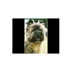 Cairn Terrier Magneet