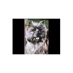 Cairn Terrier Glossy kaart