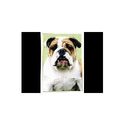 Engelse Bulldog Glossy kaart