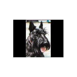 Schotse Terrier Glossy kaart