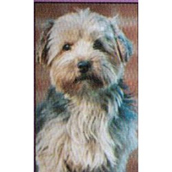 Yorkshire Terrier Glossy kaart