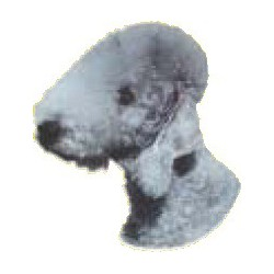 Bedlington Terrier Sticker...