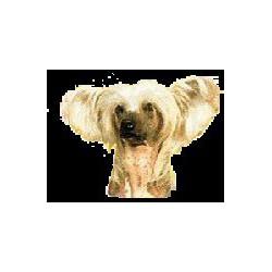 Chineese Naakthond Sticker...