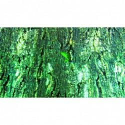 Achterwanden - Terrarium-Achterwand boomschors/regenwoud