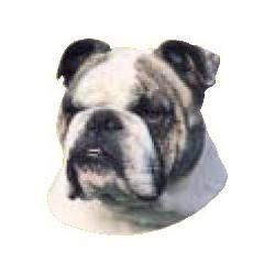 Engelse Bulldog Sticker 14cm