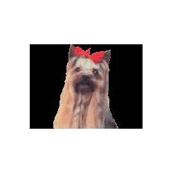 Yorkshire Terrier Sticker 14cm