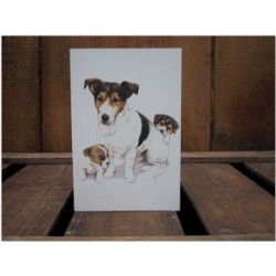 Jack Russell Terrier pups...