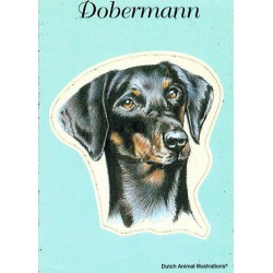 Dobermann Sticker 10x12cm