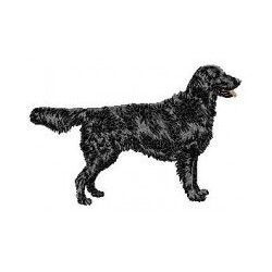 Flatcoated Retriever...