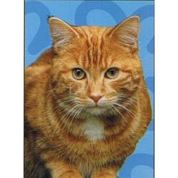 Ginger kat Spectrum kaart FF