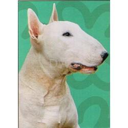 Bull Terrier Spectrum kaart