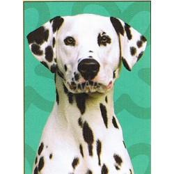 Dalmatische Hond Spectrum...