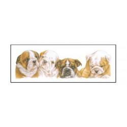 Engelse Bulldog smalle kaart