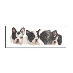 Franse Bulldog smalle kaart