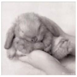 Benjamin Bunny kaart