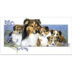 Shetland Sheepdog Family...