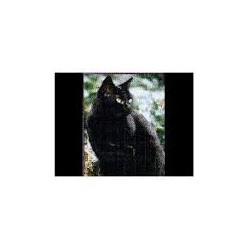 Zwarte kat magnetische...