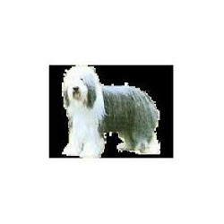 Bearded Collie Stickers 7cm