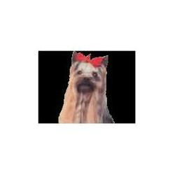 Yorkshire Terrier stropdasclip