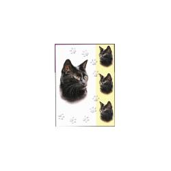 Zwarte kat Simply