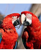 SALE vogelartikelen